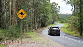 A car on the road through forest with kangaroo sign